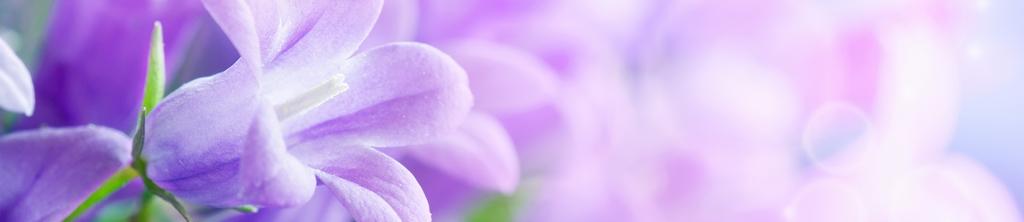 S_цветы_047