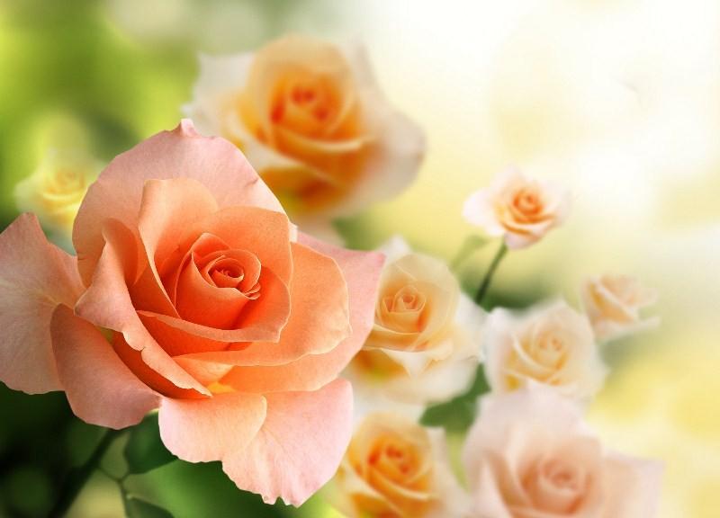 Цветы_215