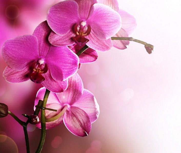 Цветы_151