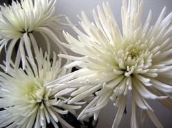 Цветы_188