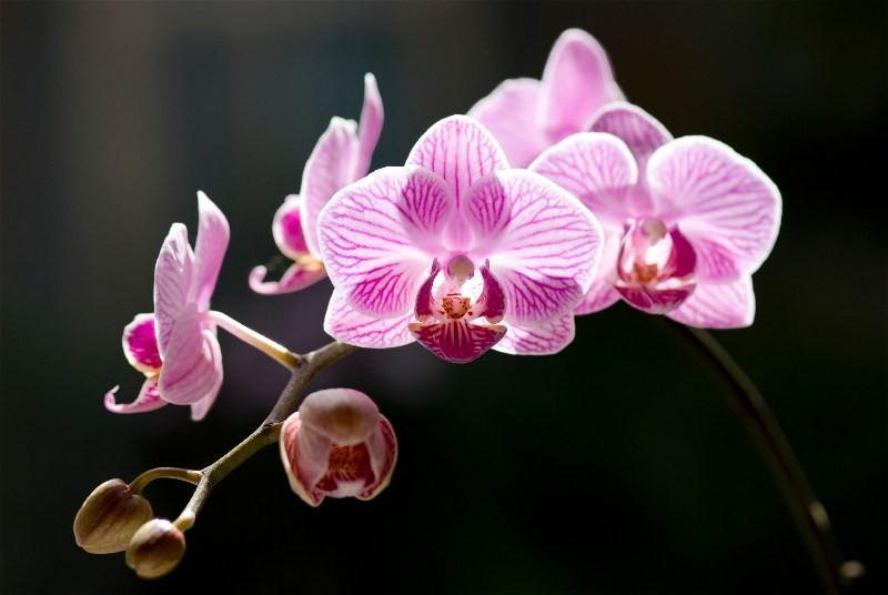 Цветы_126