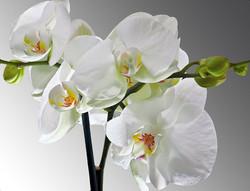 Цветы_079