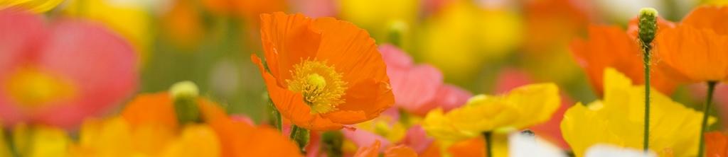 S_цветы_009
