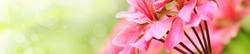 S_цветы_327