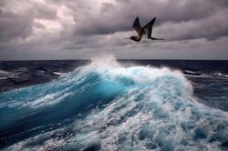 Морская тема_359