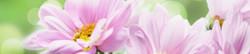 S_цветы_142