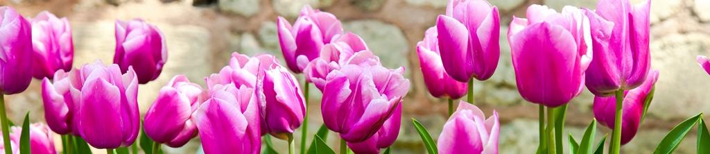 S_цветы_027