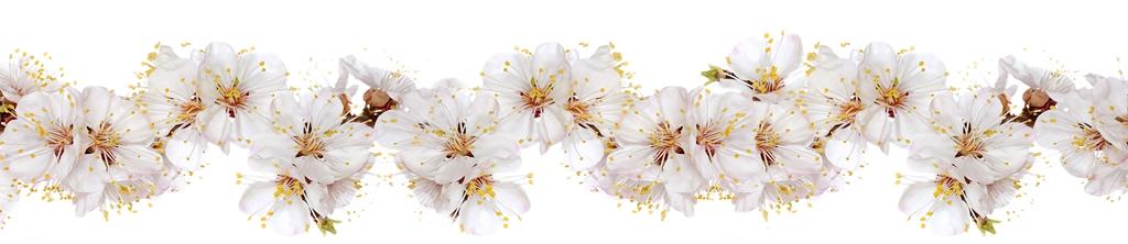 S_цветы_096