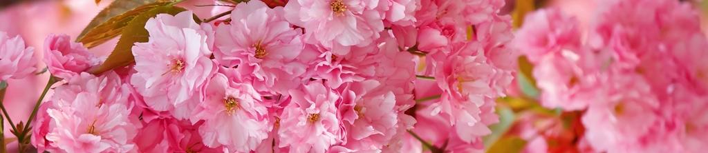 S_цветы_086