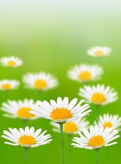 Цветы_191