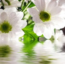 Цветы_019