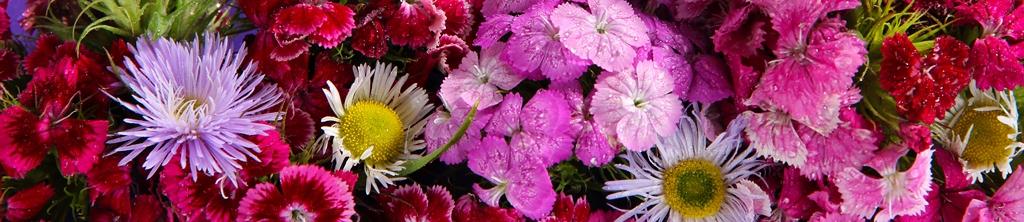 S_цветы_144