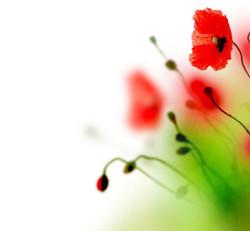 Цветы_064
