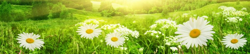 S_цветы_033