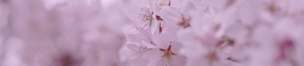 S_цветы_073