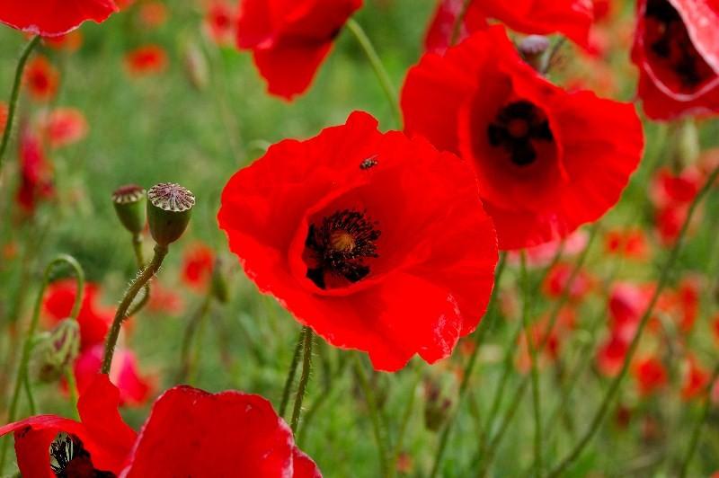 Цветы_041
