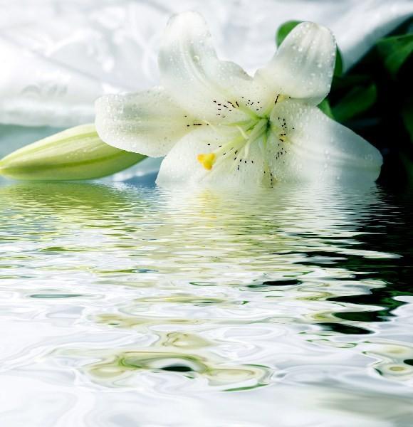 Цветы_046