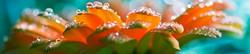 S_цветы_035