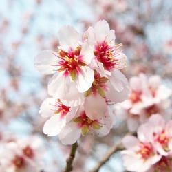 Цветы_206