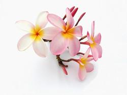 Цветы_056