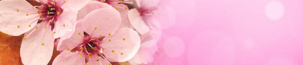 S_цветы_219