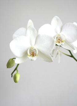 Цветы_009
