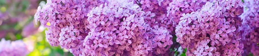 S_цветы_029