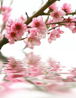 Цветы_038