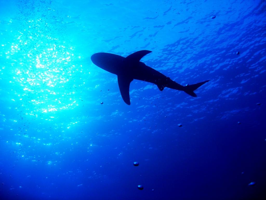 Морская тема_097
