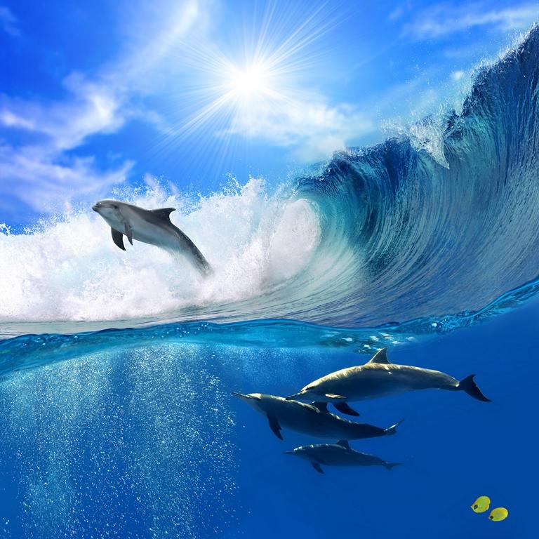 Морская тема_438