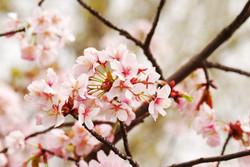 Цветы_024