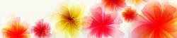 S_цветы_206