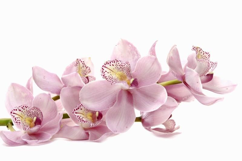 Цветы_234
