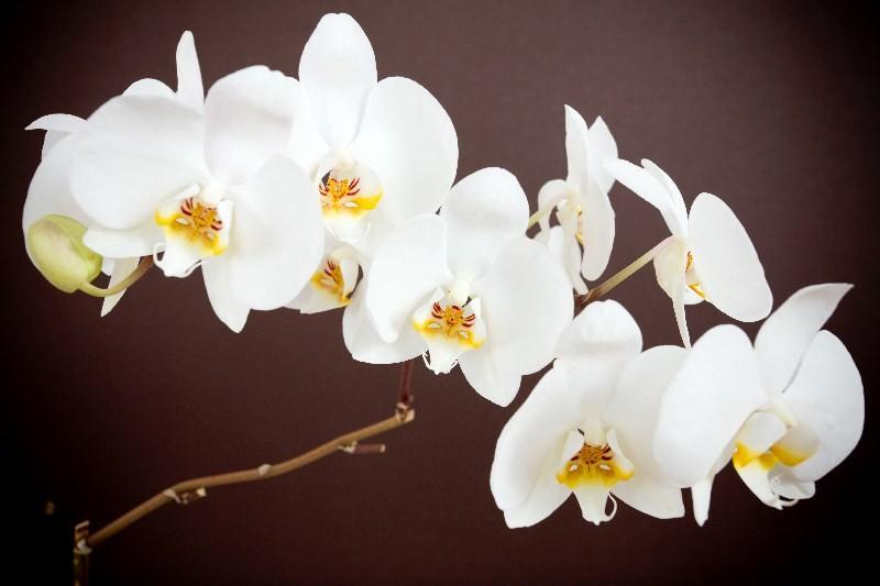 Цветы_083
