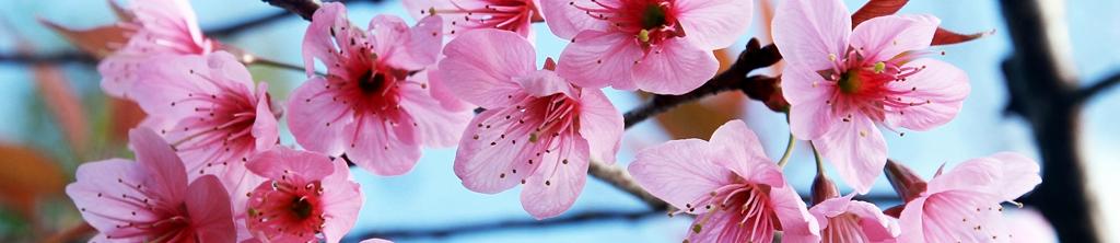 S_цветы_103
