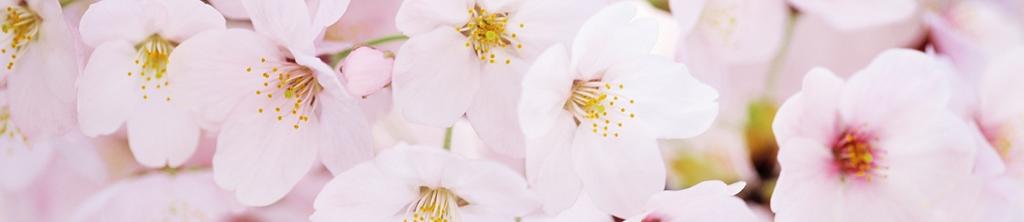 S_цветы_186