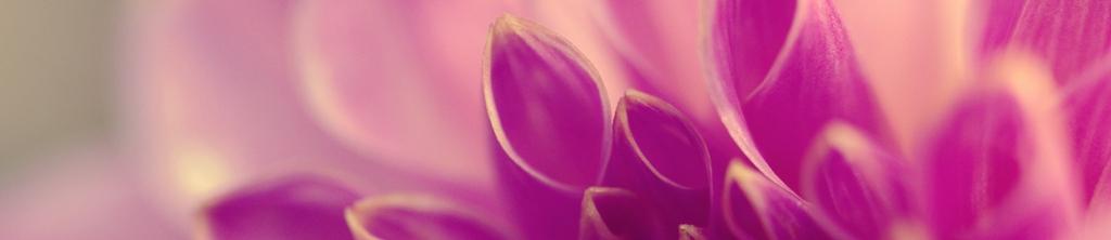 S_цветы_008