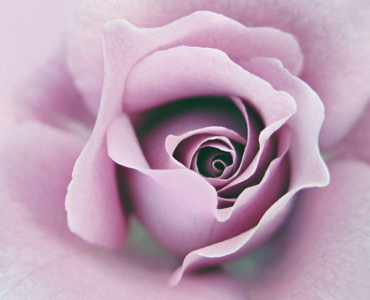 Цветы_004