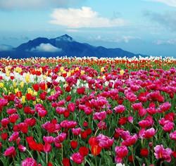 Цветы_016