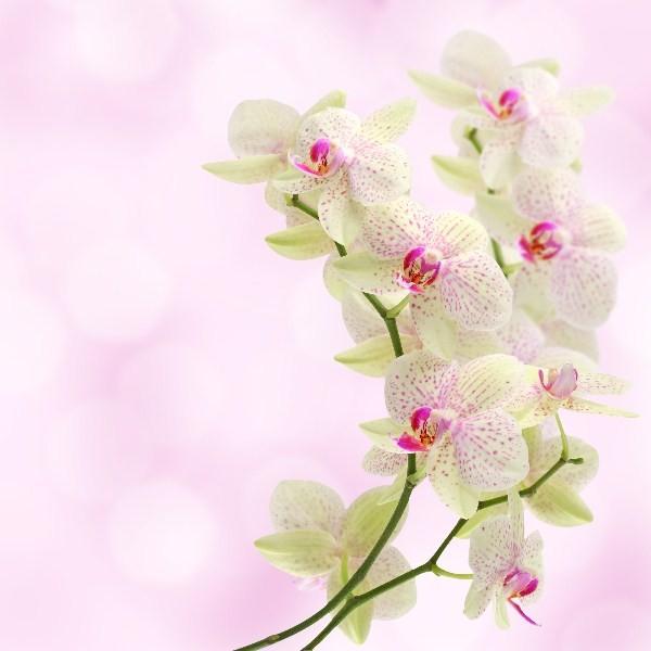 Цветы_220
