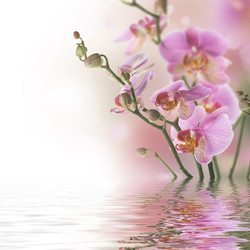 Цветы_087