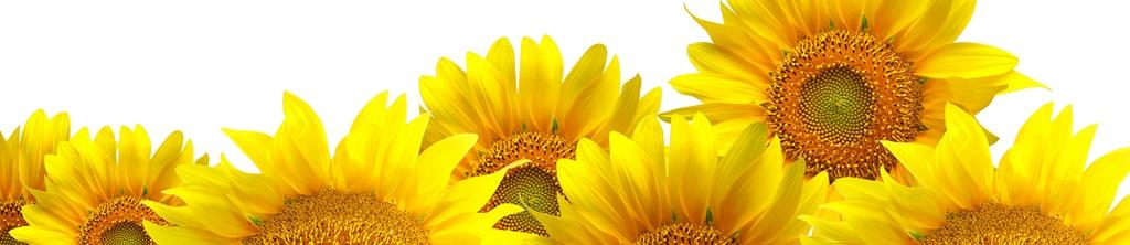 S_цветы_001