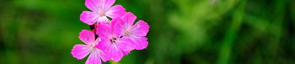 S_цветы_324