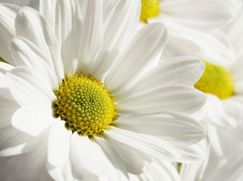 Цветы_094
