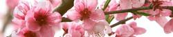 S_цветы_018