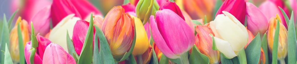 S_цветы_161