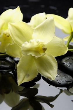 Цветы_155