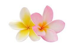 Цветы_097