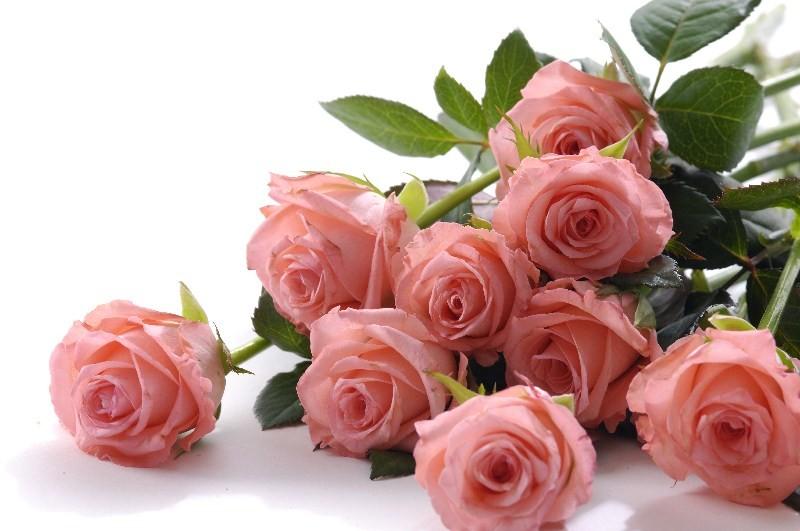 Цветы_037