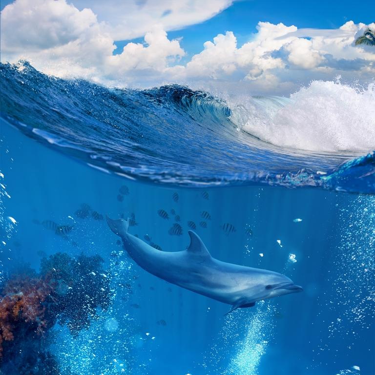 Морская тема_432